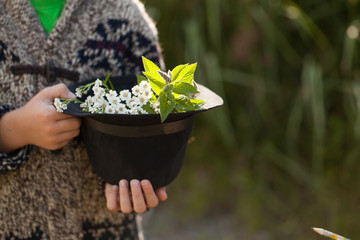 forest herbs in a hat held by a boy