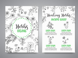 Herbs and Wild Flowers. Hand drawn herbal design with spices, medicinal, cosmetic plants. Illustration for beauty store advertising, brochures, flyers, cosmetology