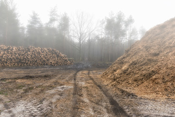A large pile of pine wood and shavings stored by the road in the forest.