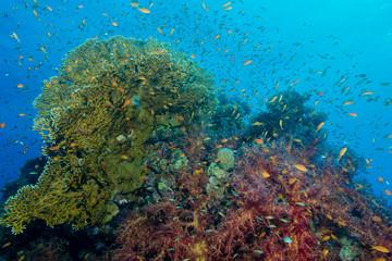 Lebendiges Korallenriff