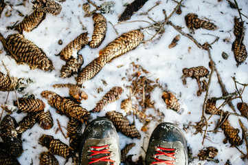 In a snowy mountain forest, close-up of boots with red laces on the snowy ground and with many pine cones