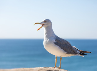 Seagull standing against blue sky