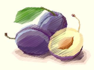 Vector illustration of drawing fruit plum.