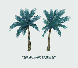 Tropical palm trees set. Vector Illustration. Isolated image