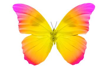 Бабочка с яркими разноцветными крыльями, изолирована на белом фоне