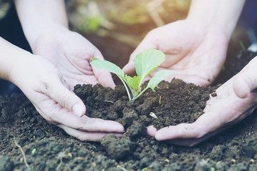 Couple hands are planting green small green vegetable holding black well organic soil - people and environment protection concept