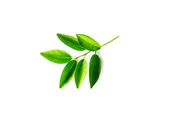 Fresh lime leaf isolated on white background.Orange Leaves.Kaffir leaf.