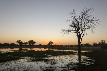 Sunset over the Delta, Khwai Conservation Area, Botswana, Africa