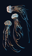 The magic color of marine jellyfish. Transparency and finesse of jellyfish. Creating ocean patterns