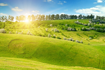 Hilly green fields and the sun on a blue sky. Agricultural landscape.