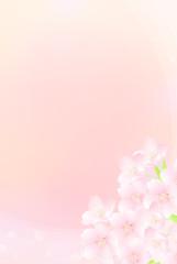 桜 クローズアップ イラスト