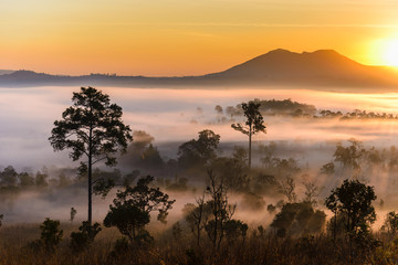 Sunrise at Thung Salaeng Luang National Park with mist in the forest, Phitsanulok and Phetchabun Provinces of Thailand