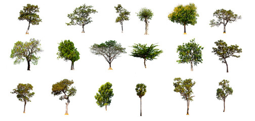 set of Tree isolated on white background