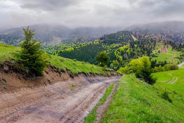 springtime in Carpathian mountains