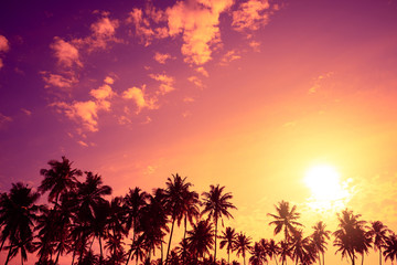 Tropical palm trees silhouettes at sunset. Vivid tropical beach sunset with big warm shining sun on vacation island.