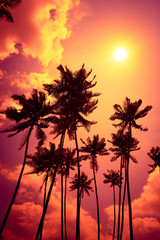 Beautiful colorful tropical sunset with palm trees silhouettes