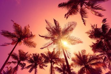 Bright vivid pink tropical sunset with shining sun