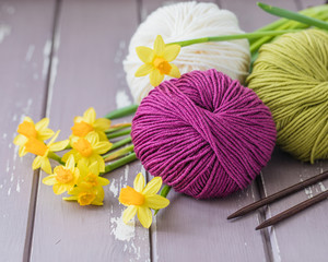 Spring colorful wool yarn with knitting needles and yellow daffodils