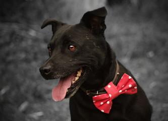 Hund mit rote Schleife