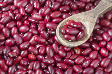 Raw red beans Phaseolus vulgaris