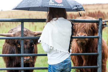 I love scotland! Joung girl meeting two scottish hairy cows