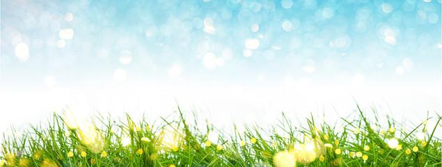 Naturhintergrund Frühling Bokeh