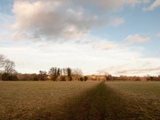 muddy brown pathway through farm field grass winter bare trees