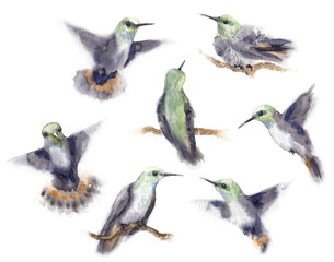 Watercolor Humming Bird Set