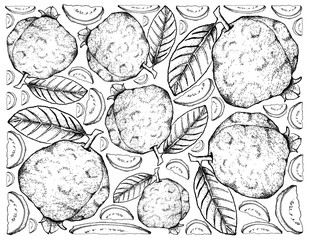 Hand Drawn Background of Fresh Guava Fruits