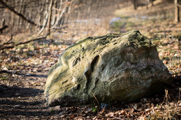 Erratic stones in the forest. The environment, stones lying in the grass.