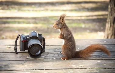 Squirrel watching to take photos