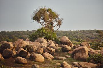 Sri Lanka stone