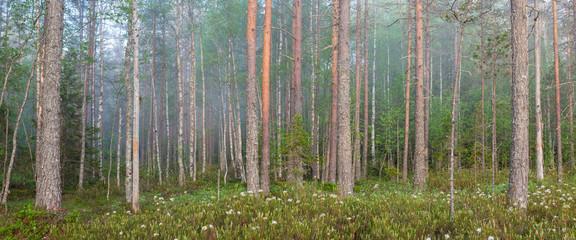 Fog in forest at dawn Finland