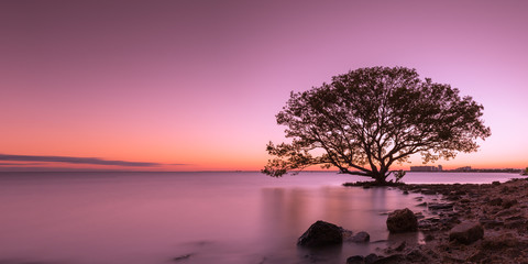 Tree silhouette in water during sunset