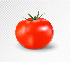Red tomato. Realistic vector illustration