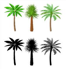 Tropical green palm. Jungle leaves