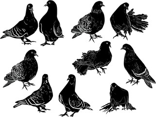 ten pigeon sketches collection on white