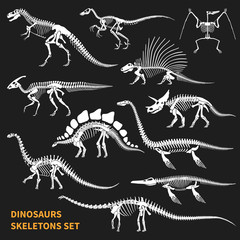 Dinosaurs Skeletons Chalkboard Icons Set