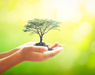 World soil day concept: Human hand holding big tree over beautiful nature background