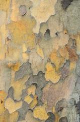 Fotobehang Oude vuile getextureerde muur old wood tree bark