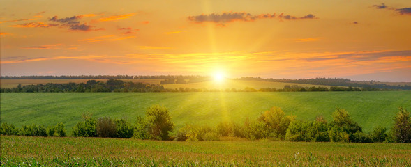 corn field and sunrise on blue sky Wall mural