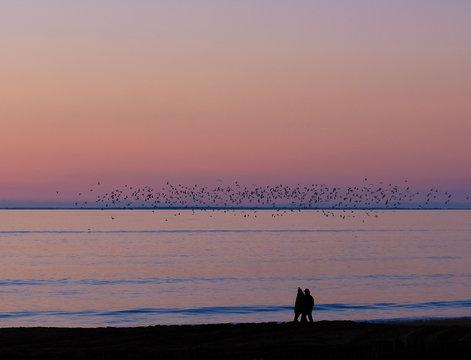 Flock of birds flying over ocean at sunset, Chatelaillon, La Rochelle, Nouvelle-Aquitaine, France