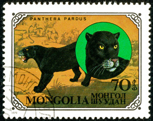 Ukraine - circa 2018: A postage stamp printed in Mongolia show Leopard or Panthera pardus. Series: Wild cats. Circa 1979.