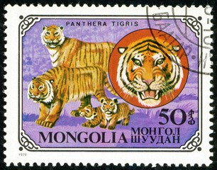 Ukraine - circa 2018: A postage stamp printed in Mongolia show Tiger or Panthera tigris. Series: Wild cats. Circa 1979.
