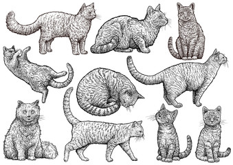 Cat collection illustration, drawing, engraving, ink, line art, vector