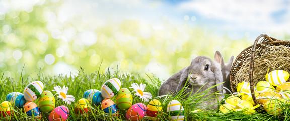 hase mit Korb eiern in der natur landschaft