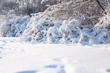 Nice Winter Background