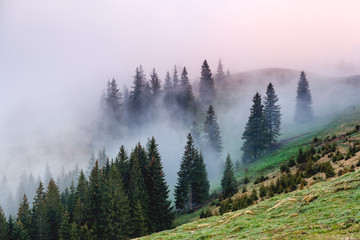 Morning fog covered the hills with spruces. Dramatic and gorgeous scene.