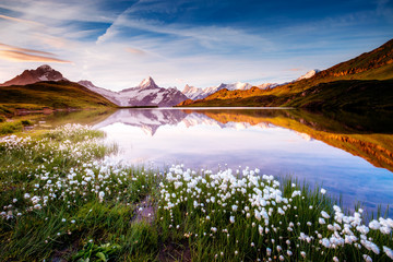 Wall Mural - Great view of Bernese range above Bachalpsee lake. Location Swiss alps, Grindelwald valley.