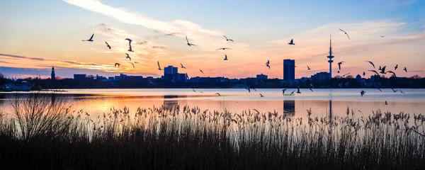 Panorama der Grosstadt Silhouette Hamburg an der Aussenalster abends